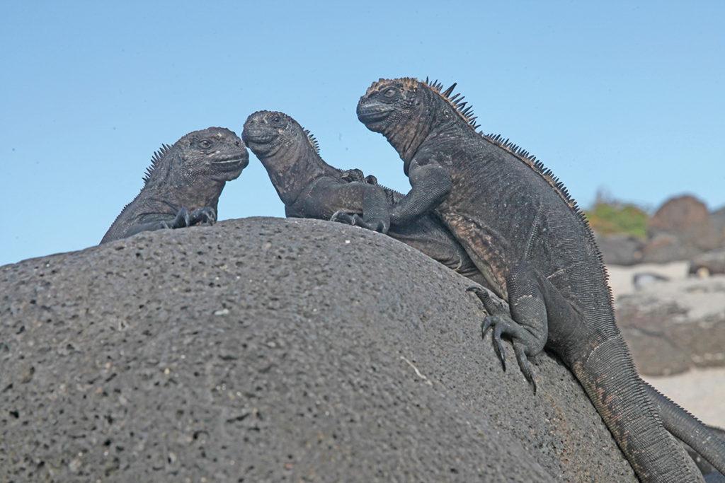 Rejser til Galapagos med Rasmussen Travel. Krydstogter og øhop
